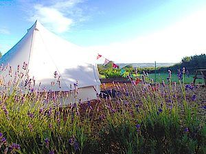 Lily Bell Tent